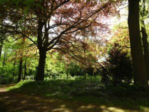 Alter Baumbestand im Sola Bona Park